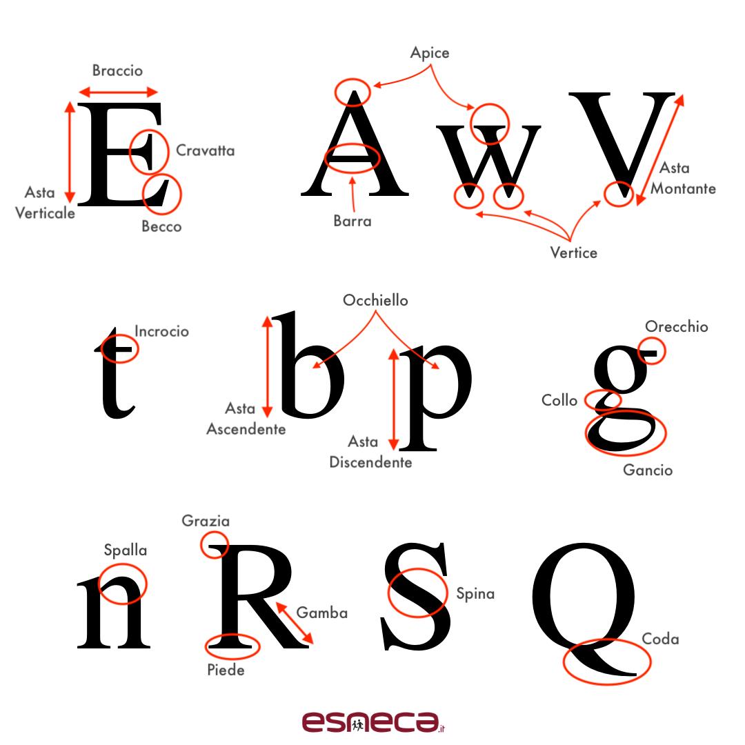anatomia caratteri tipografici