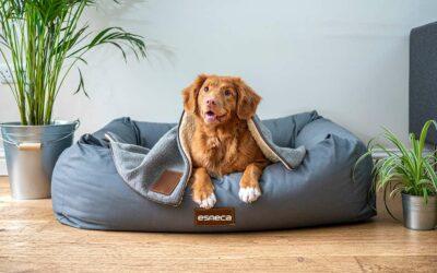 I parassiti più comuni dei cani e come prevenirli